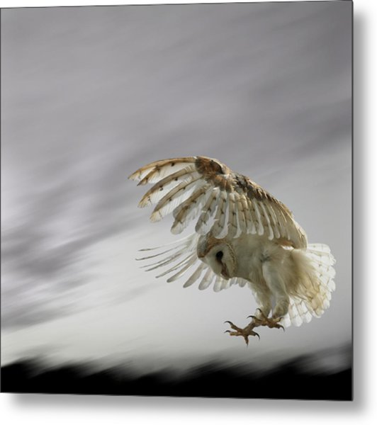 Barn Owl Flying Against And Overcast Sky Metal Print by Digital Zoo