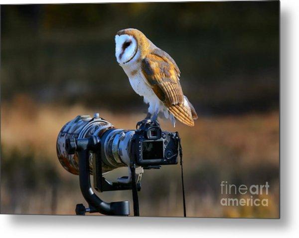 Barn Owl Tyto Alba Sitting On A Camera Metal Print