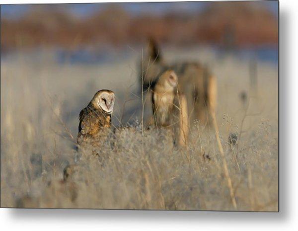 Barn Owls 9 Metal Print