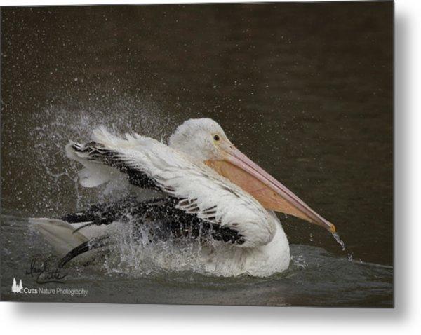 Bathing Pelican Metal Print