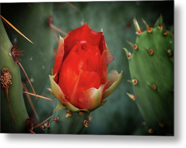 Metal Print featuring the photograph Be My Valentine by Rick Furmanek