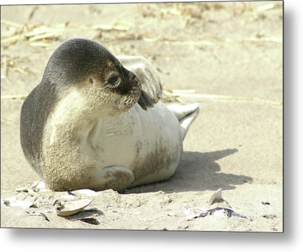 Beach Seal Metal Print
