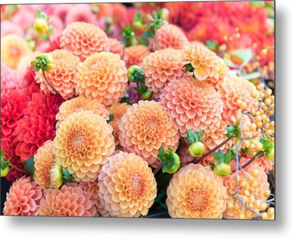 Beautiful Dahlia Flowers For Sale At Metal Print
