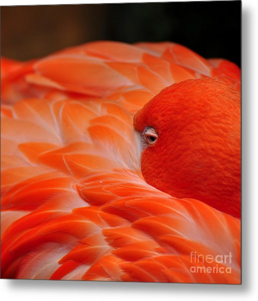 Beautiful Flamingo Metal Print