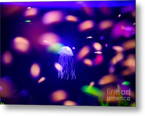 Beautiful Jellyfish, Medusa In The Neon Metal Print