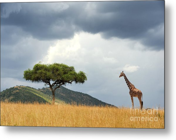 Beautiful Landscape With Nobody Tree Metal Print