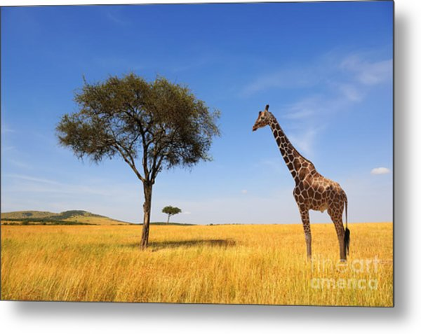 Beautiful Landscape With Tree And Metal Print