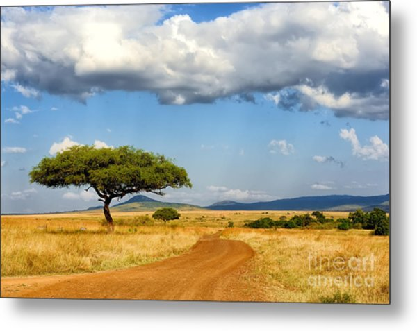 Beautiful Landscape With Tree In Africa Metal Print