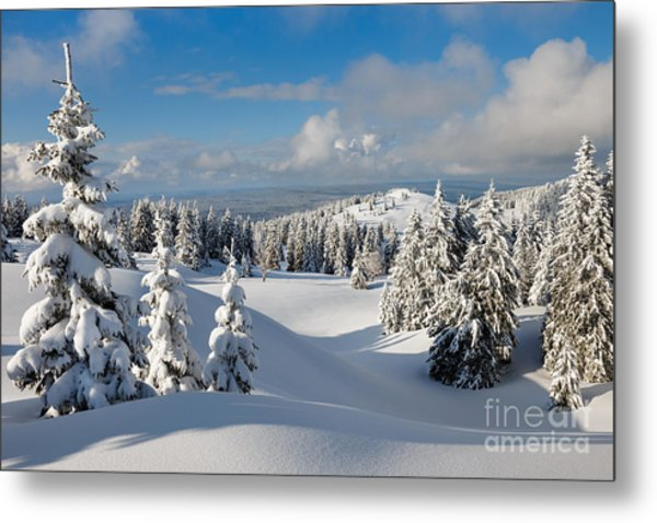 Beautiful Snowy Landscape .firs In A Metal Print