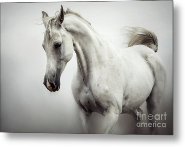 Metal Print featuring the photograph Beautiful White Horse On The White Background by Dimitar Hristov