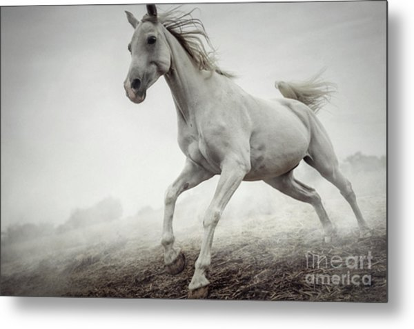 Metal Print featuring the photograph Beautiful White Horse Running In Mist by Dimitar Hristov
