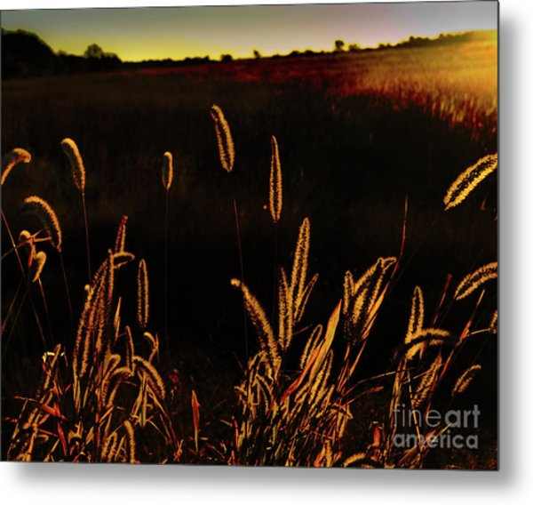 Beauty In Weeds Metal Print