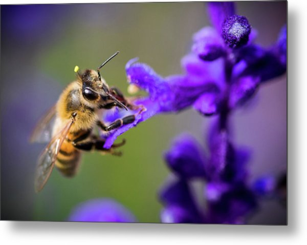 Metal Print featuring the photograph Bee On A Purple Flower by Nicole Young