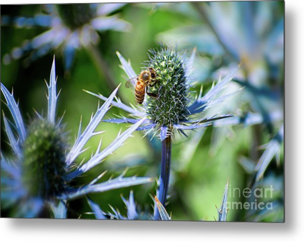 Bee's Got The Blues Metal Print