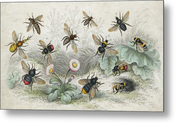 Bees In Colour Metal Print by Hulton Archive