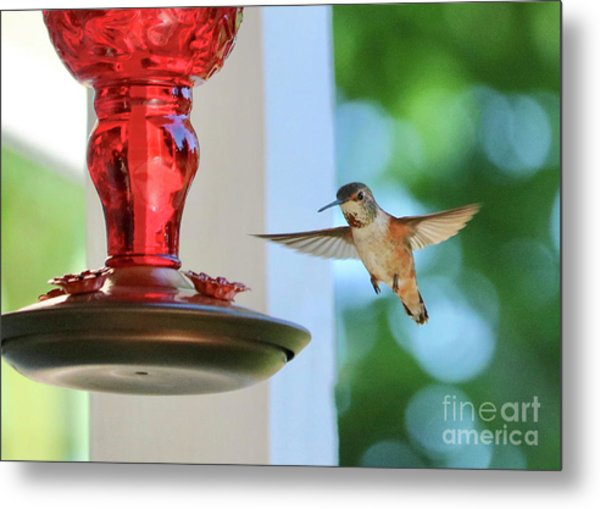 Bejeweled Hummingbird Metal Print