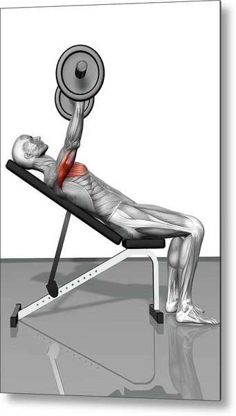 Bench Press Incline Part 1 Of 2 Metal Print by Medicalrf.com