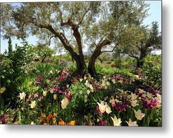 Beneath The Olive Tree, Marnes, Spain Metal Print by Josie Elias