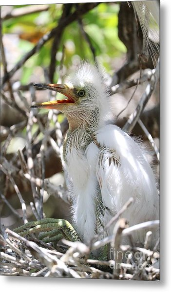 Big Baby Great Egret Metal Print