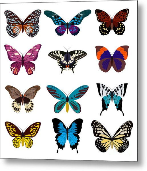 Big Collection Butterfly Of Colorful Metal Print