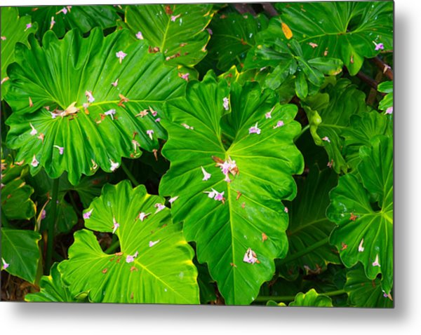 Big Green Leaves Metal Print
