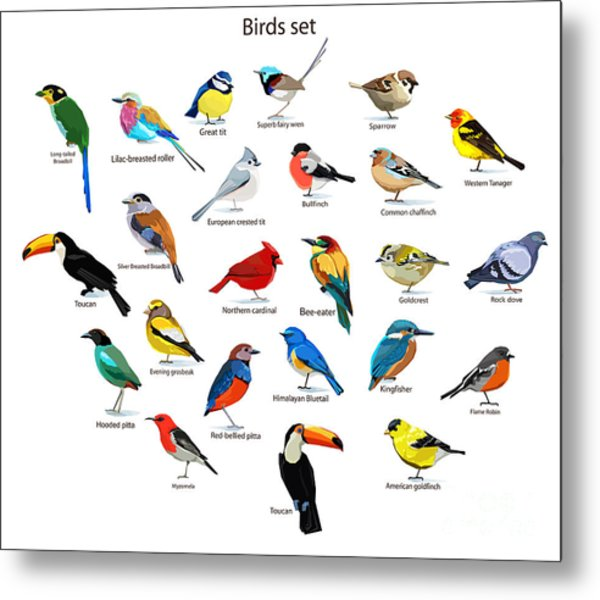 Big Set Birds. Birds Flying, Animals Metal Print