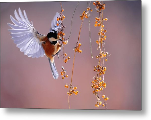 Bird Eating On The Fly Metal Print