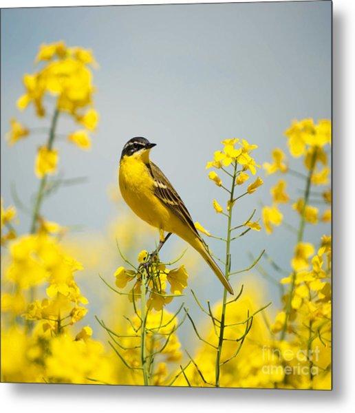 Bird In Yellow Flowers, Rapeseed Metal Print