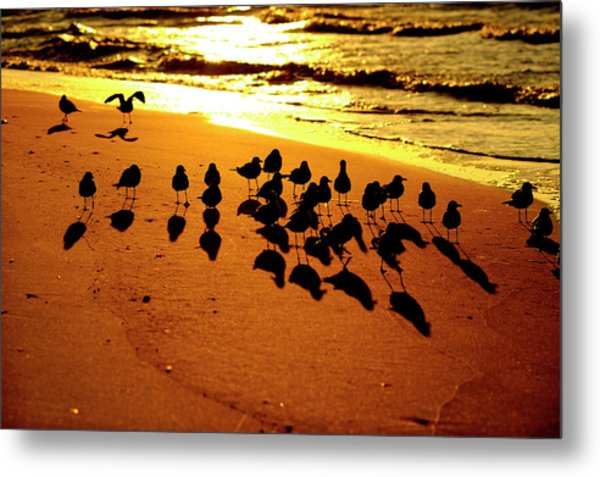 Bird Shadows Metal Print