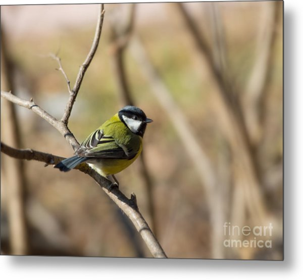 Birds And Animals In Wildlife. Greater Metal Print