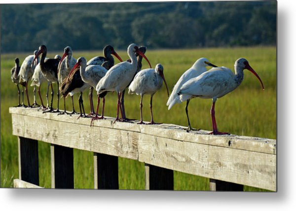Birds Of A Feather On Jekyll Island Metal Print