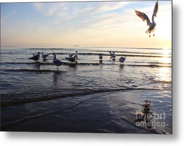 Birds On The Sunset. Seagulls At Sunset Metal Print