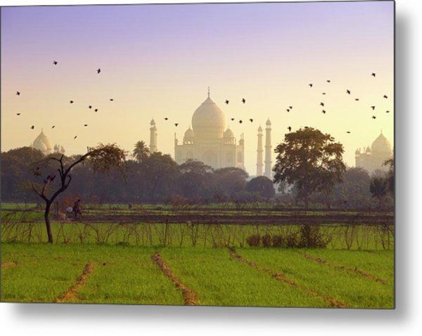 Birds Take Flight Near Taj Mahal Metal Print