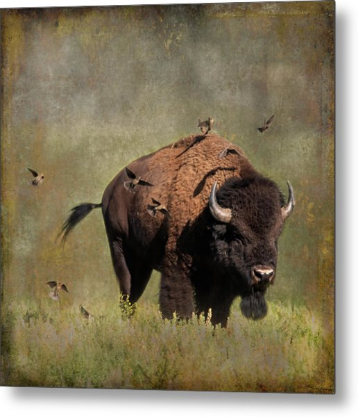 Bison And Friends Metal Print
