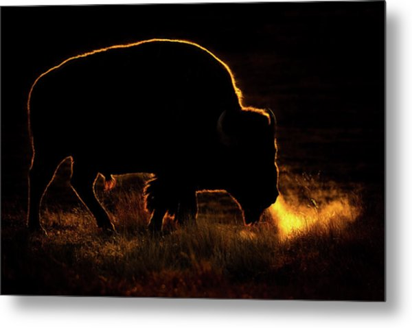 Bison Breath Metal Print