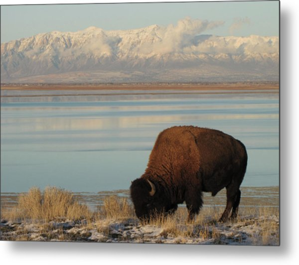 Bison In Front Of Snowy Mountains Metal Print