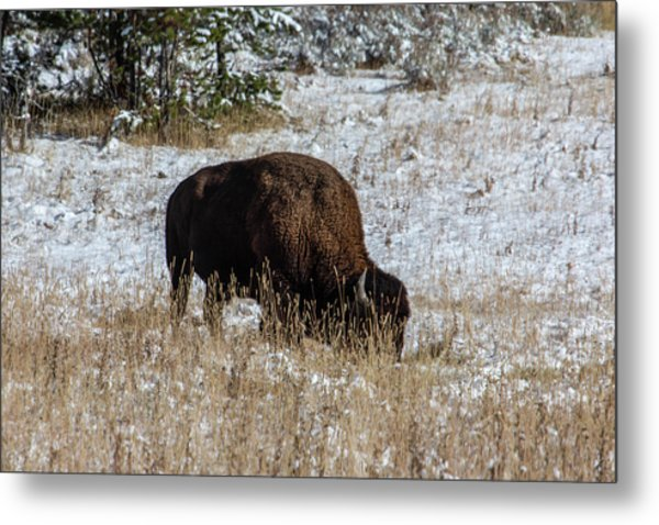 Metal Print featuring the photograph Bison In The Snow by Pete Federico