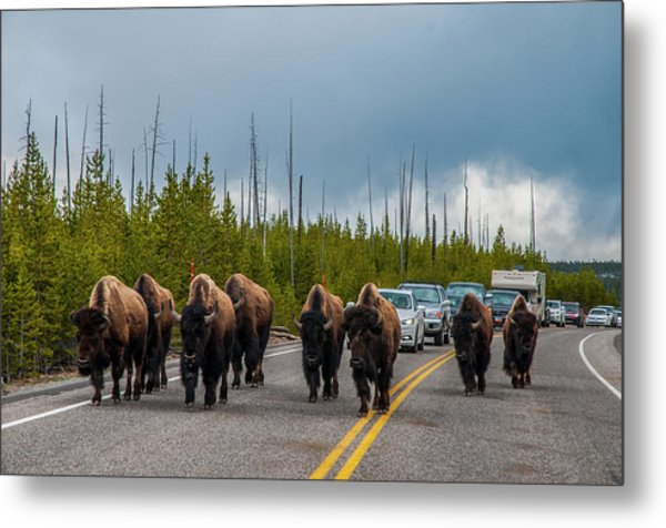 Metal Print featuring the photograph Bison Jam by Matthew Irvin