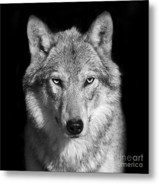 Black And White Close Up Portrait Of Metal Print