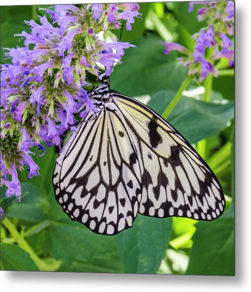 Black And White On Purple Metal Print