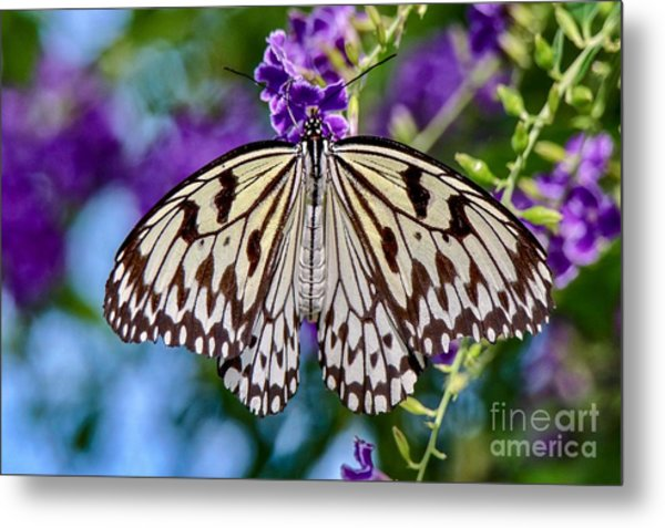 Black And White Paper Kite Butterfly Metal Print