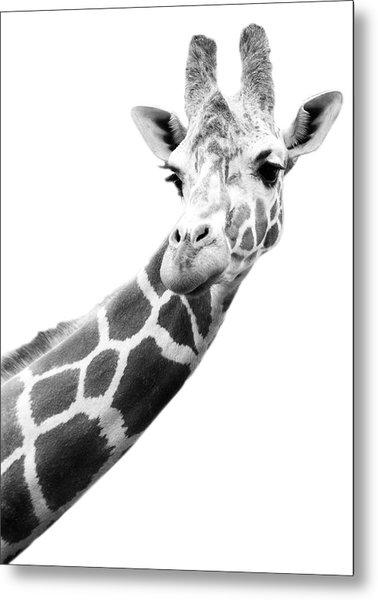 Black And White Portrait Of A Giraffe Metal Print by Design Pics
