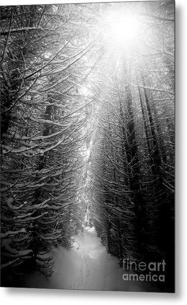 Black And White Winter Forest, Vertical Metal Print