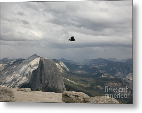 Black Bird Half Dome Yosemite National Park Metal Print