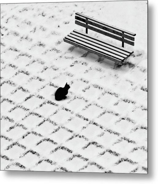 Black Cat Contemplating Bench Metal Print by Photo By Marianna Armata