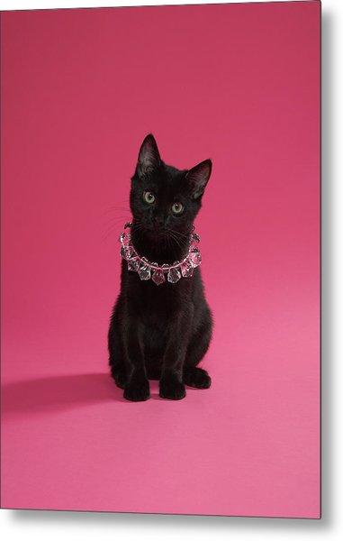 Black Kitten Wearing Jewelled Necklace Metal Print