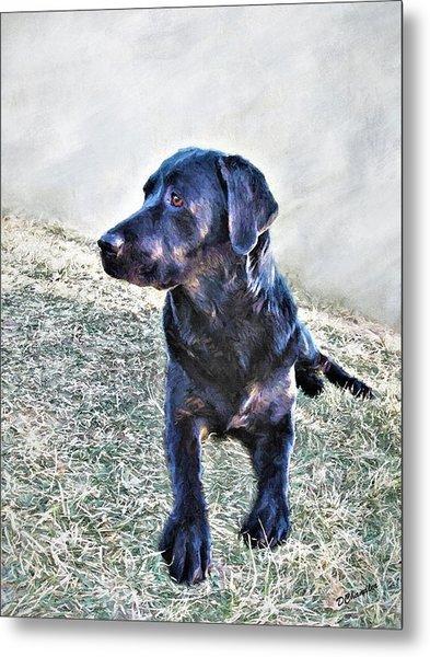 Black Labrador Retriever - Daisy Metal Print
