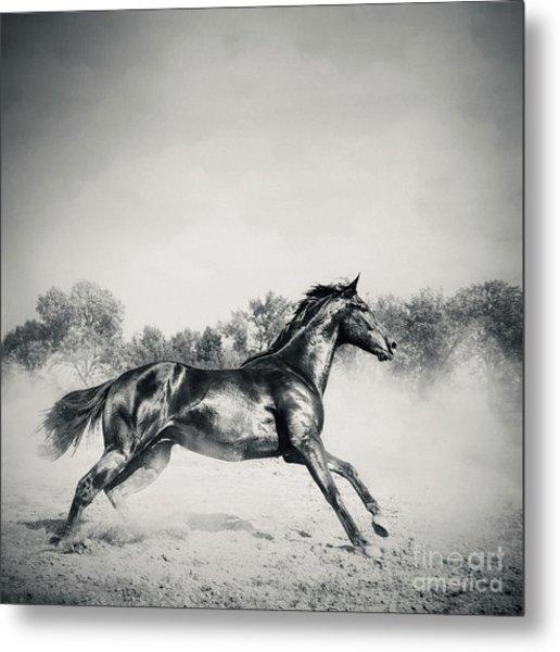 Metal Print featuring the photograph Black Stallion Horse by Dimitar Hristov