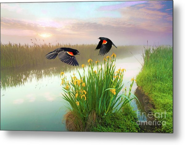 Blackbirds Dance With Iris Metal Print