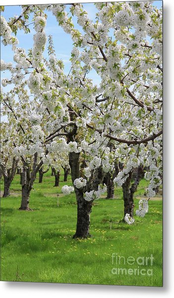 Blossoming Spring Day Metal Print